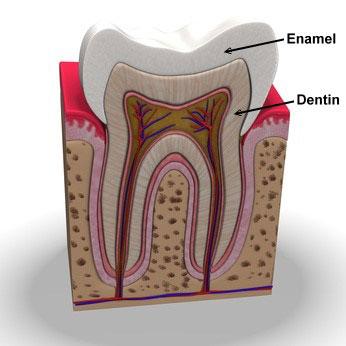 Layers of Teeth